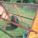 DIY Chicken Coop For Your Backyard