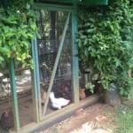 Ideas for Chicken Coop Designs
